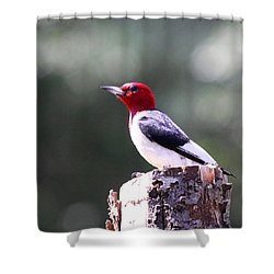 Red-headed Woodpecker - Statue Shower Curtain