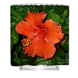 Shower Curtain featuring the photograph Red Hibiscus After The Rain by Renee Trenholm