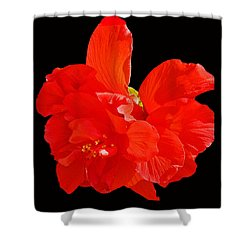 Red Hibiscus Shower Curtain by Cindy Manero