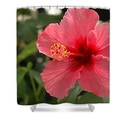 Red Hibiscus Shower Curtain by Jerry McElroy