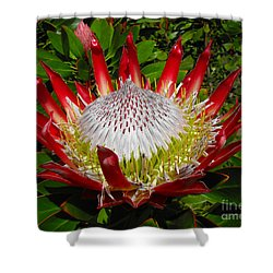 Red King Protea Shower Curtain