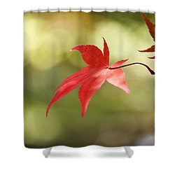 Shower Curtain featuring the photograph Red Leaf. by Clare Bambers