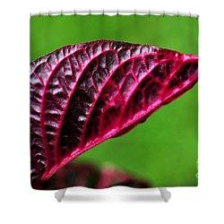 Red Leaf Shower Curtain by Kaye Menner