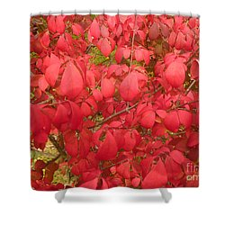Red Leaves Iv Shower Curtain by Alys Caviness-Gober