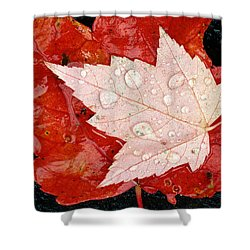 Red Maple Leaves Shower Curtain by Mike Grandmailson