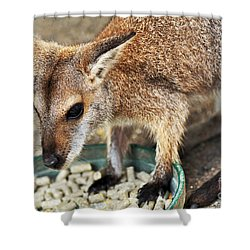 Red-necked Wallaby Shower Curtain by Kaye Menner