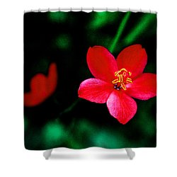 Red Petaled Dream Shower Curtain