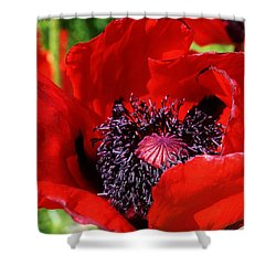 Red Poppy Close Up Shower Curtain