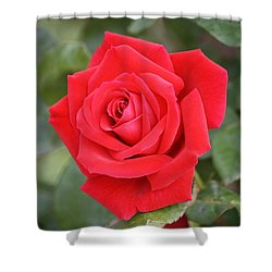 Shower Curtain featuring the photograph Red Rose by Donna  Smith