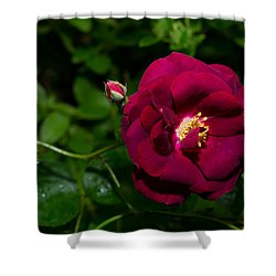 Red Rose In The Wild Shower Curtain