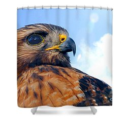 Shower Curtain featuring the photograph Red Shouldered Hawk Portrait by Dan Friend