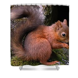 Shower Curtain featuring the photograph Red Squirrel by Lynn Bolt