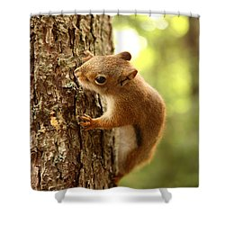 Red Squirrel Shower Curtain by Ted Kinsman