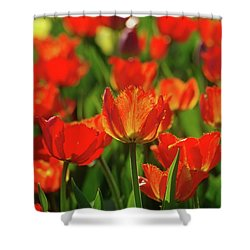 Shower Curtain featuring the photograph Red Tulips by Dariusz Gudowicz