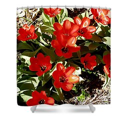 Shower Curtain featuring the photograph Red Tulips by David Pantuso