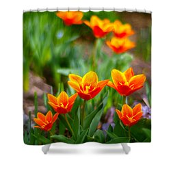 Red Tulips Shower Curtain by Paul Ge