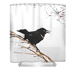 Shower Curtain featuring the digital art Red Winged Blackbird by Lizi Beard-Ward
