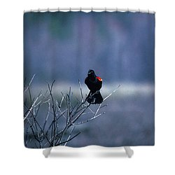 Red-wings Morning Call 10o Shower Curtain by Gerry Gantt