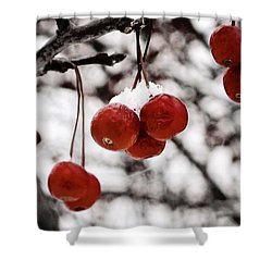 Red Winter Berries Shower Curtain