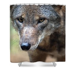 Red Wolf Closeup Shower Curtain by Karol Livote
