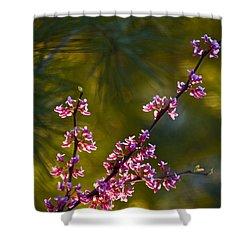 Redbud Shower Curtain by Rob Travis