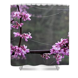 Redbud With Webs And Dew Shower Curtain