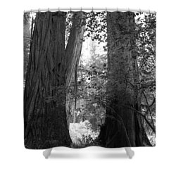 Redwood Pair Shower Curtain