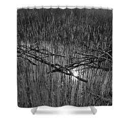 Reeds And Tree Branches Shower Curtain by David Pyatt