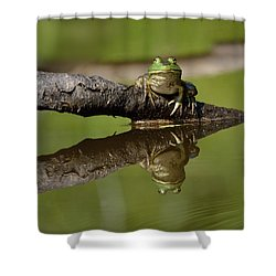 Reflecktafrog Shower Curtain by Susan Capuano