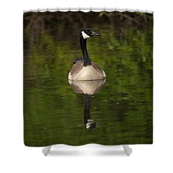 Reflecting Shower Curtain by Karol Livote