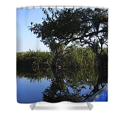 Reflection Of Arched Branches Shower Curtain by Anne Mott
