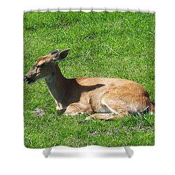 Relaxin Shower Curtain by Aimee L Maher Photography and Art Visit ALMGallerydotcom