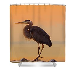 Resting Heron Shower Curtain