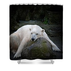 Resting Polar Shower Curtain by Karol Livote