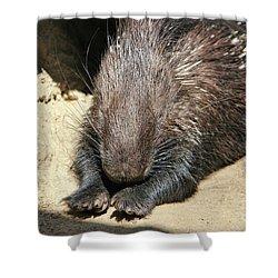 Resting Porcupine Shower Curtain by Mariola Bitner
