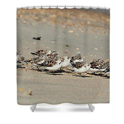 Resting Sandpipers Shower Curtain