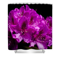 Rhododendron Shower Curtain by David Patterson