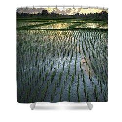 Rice Fields, Near Ubud Bali, Indonesia Shower Curtain by Huy Lam