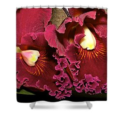 Rich Burgundy Orchids Shower Curtain by Phyllis Denton