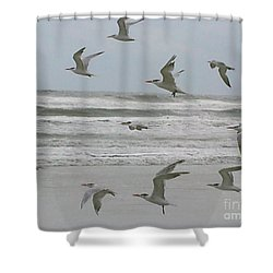 Shower Curtain featuring the photograph Riding The Wind by Donna Brown