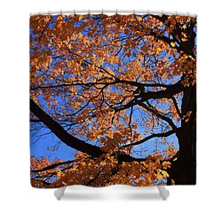 Right Place Right Time Shower Curtain by Lyle Hatch