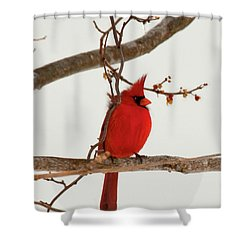 Righteous Cardinal Shower Curtain