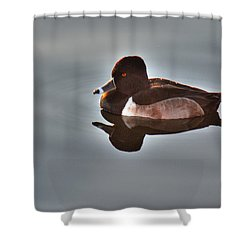 Shower Curtain featuring the photograph Ring-necked Duck by Tam Ryan