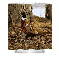 Ring-necked Pheasant Shower Curtain by Alyce Taylor