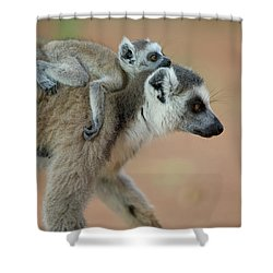 Ring-tailed Lemur Lemur Catta Baby Shower Curtain by Cyril Ruoso