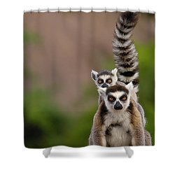 Ring-tailed Lemur Lemur Catta Mother Shower Curtain by Pete Oxford