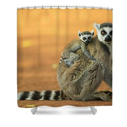 Ring-tailed Lemur Mother And Baby Shower Curtain by Cyril Ruoso
