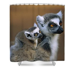 Ring-tailed Lemur Mother Carrying Baby Shower Curtain by Cyril Ruoso