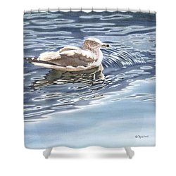 Ringed Bill Gull Shower Curtain by Richard De Wolfe