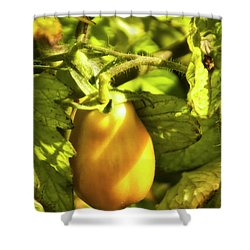 Shower Curtain featuring the photograph Ripening Roma by Albert Seger